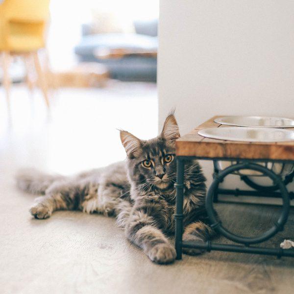 Mačke preferiraju poznato okruženje